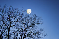 Moon through winter branches Stock Image
