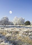 Moon and wintry countryside. Scenic view of wintry countryside with moon in blue sky Stock Image