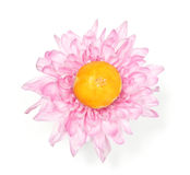 Mooncakes na dália cor-de-rosa Imagem de Stock Royalty Free
