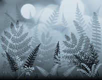 Moonferns Stock Image