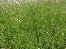 Moonflowers зеленой травы и маргаритки луга весной со штилем и отношением с природой стоковое изображение