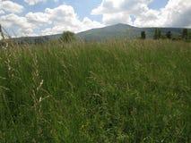 Moonflowers зеленой травы и маргаритки луга весной со штилем и отношением с природой стоковые фотографии rf
