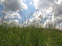 Moonflowers зеленой травы и маргаритки луга весной со штилем и отношением с природой стоковые фото