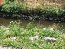 Moonflowers Image libre de droits