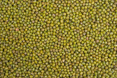 Moong beans Stock Image