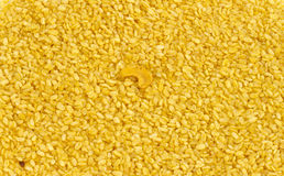 MOONG DAL Royalty Free Stock Images
