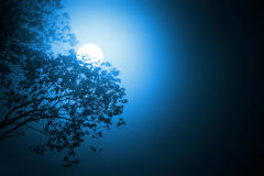 Moonlight. Night scene with moonlight through tree royalty free stock photo