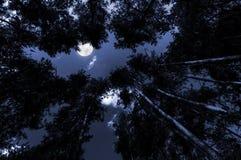 Moonlight Royalty Free Stock Photo
