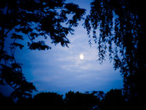 Moonlight. Atmospheric moonlight framed by tree tops stock photo