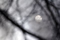 Moonlight. Silver Moonlight - nightshot- monochrome background stock image