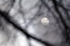 Moonlight. Silver Moonlight - nightshot- monochrome background Stock Image
