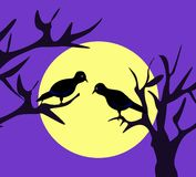 Moonlight Birds Stock Photo
