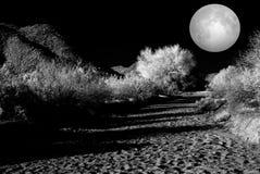 Moonlight Desert Stock Photo