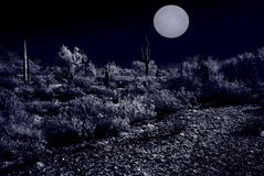 Moonlight Desert Stock Images