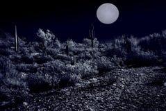 Moonlight Desert. Plants in the winter Arizona desert Stock Images