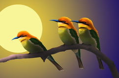 Moonlight drop on little birds. Full moon night and beautiful kingfisher birds Stock Images