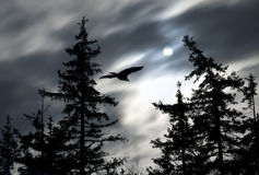Moonlight with  Eagle Stock Images