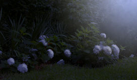 Moonlight on the Garden Stock Image