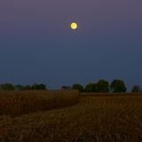 Moonlight at Harvest Time. A harvest moon rises above a newly harvested field of corn at night