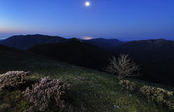 Moonlight landscape Stock Images