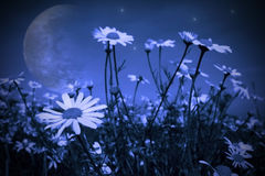 Moonlight landscape. Magic moon in the night sky royalty free stock images