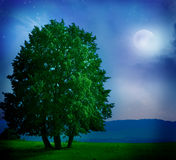 Moonlight landscape Stock Photography