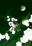Moonlight and lilies of the valley. Lilies of the valley on a moonlight night meadow Royalty Free Stock Images