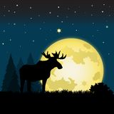 Moonlight Moose Stock Photo