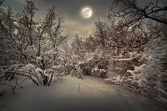 Moonlight night Stock Image