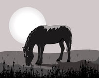 Moonlight night with a horse Stock Photography