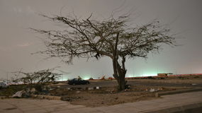 Moonlight over the Tree time lapse at night at jeddah. In saudi arabia beach stock footage