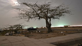 Moonlight over the Tree time lapse at night. At jeddah in saudi arabia beach stock footage
