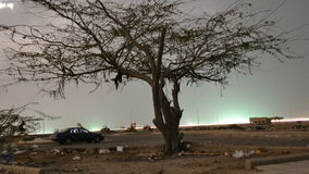 Moonlight over the Tree time lapse at night with zooming out. Moonlight over the Tree time lapse at night at jeddah in saudi arabia beach with zooming out stock footage