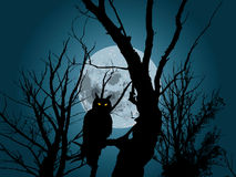 Moonlight and owl. Moonlight forest background with silhouette of owl Stock Image
