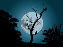 Moonlight and owl. Illustration of real picture from the night with owl and moonlight royalty free illustration