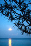 Moonlight on the sea stock images