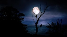 Moonlight With Silhouette Of Owl Motion Graphics Animation Background stock illustration