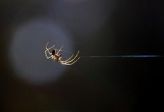 Moonlight Sonata. The optical effect of a drop away from the focus point to create a bright circle. Spider on the web, which is helpful in this place and created Stock Photo