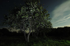 Moonlight tree Stock Image