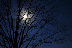Moonlight in a tree. Silhouette of a tree in the sunlight looking like moonlight royalty free stock image