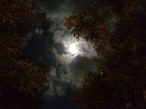 Moonlight Tree. Magical moon sky cloudy trees night light royalty free stock photo