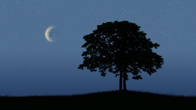 Moonlight. Two trees at romantic moonlight stock images