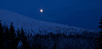 Moonlight winter night in mountains Stock Image