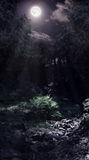 Moonlight in the woods. Forest glade and a brook lightened by the moon Stock Photography