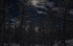 Moonlit деревья v1 Стоковые Фотографии RF