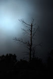 Moonlit dead tree Royalty Free Stock Photo