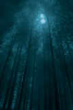 Moonlit forest Royalty Free Stock Image