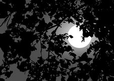 Moonlit night. Tree branches illuminated by a full moon royalty free illustration