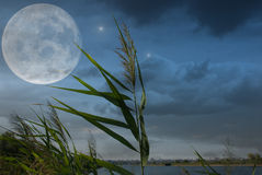 Moonlit night and clouds on night sky in the lake. Image of cane and the moon on the sky silhouette Stock Image