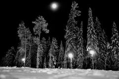 Moonlit night. In winter forest. Mounting skiing resort stock photography